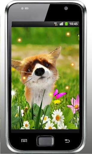 Fox Small Cute live wallpaper