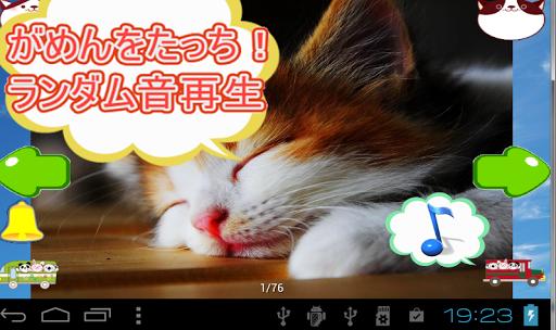 猫の声がいっぱい写真集かわいいネコ画像まとめ