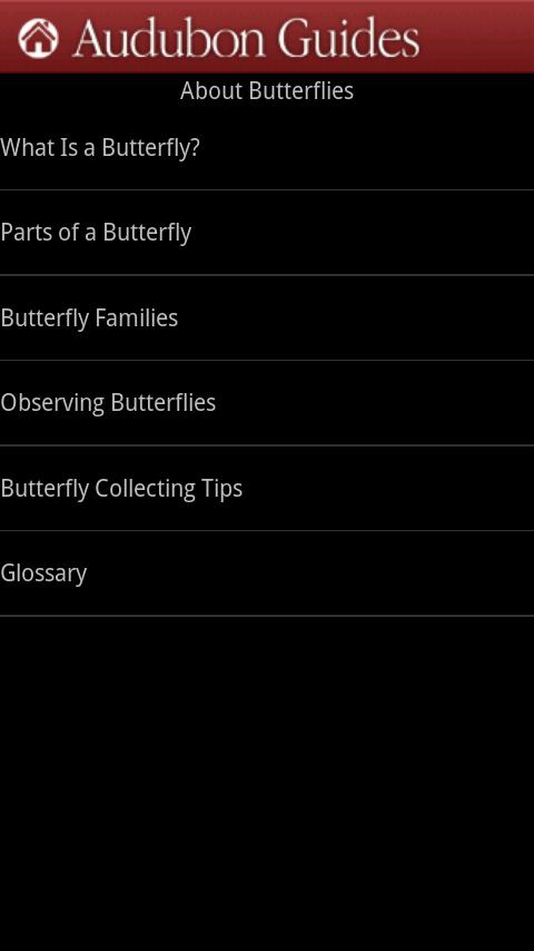 Audubon Butterflies - screenshot