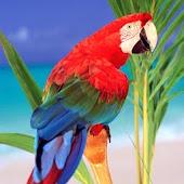 3D lovely Parrot 1