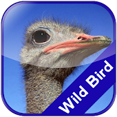 Wild Bird Matching Kids Game