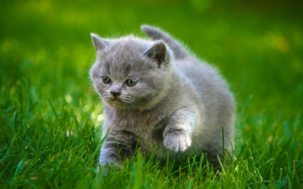 Baby Cat live wallpaper Android Apps on Google Play