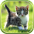 Cat Live Wallpaper file APK for Gaming PC/PS3/PS4 Smart TV