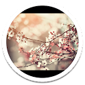 My HD Photos Spring Flower LWP icon