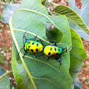 - Green Jewel Bug )