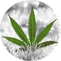 News of marijuana seeds icon