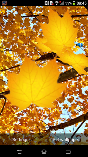 3D Leaf Falling Wallpaper
