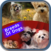 Importance Of Breeds Of Dogs