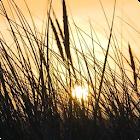 Grass Live Wallpaper HD icon