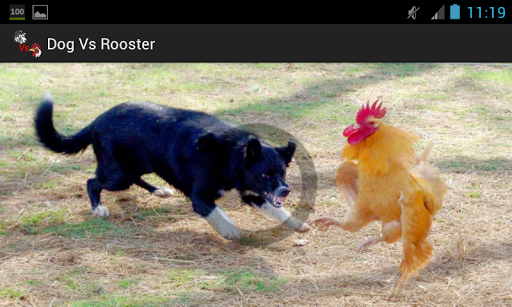 Dog Vs Rooster