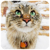 Snow Cat Live Wallpaper