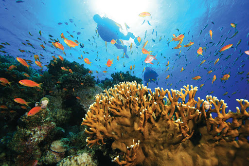 Windstar-Cruises-scuba-diving-tropics-2 - A Windstar cruise will take you to destinations where you can experience the thrill of diving in the deep blue waters of the tropics.