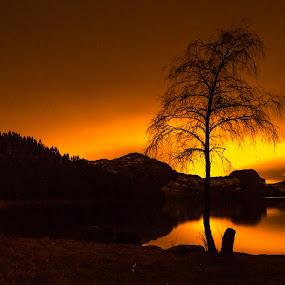 Last Light by Magnus Østebrød - Landscapes Forests ( østebrød, egersund, gådå, magnus, a99, magma, geopark, zeiss )