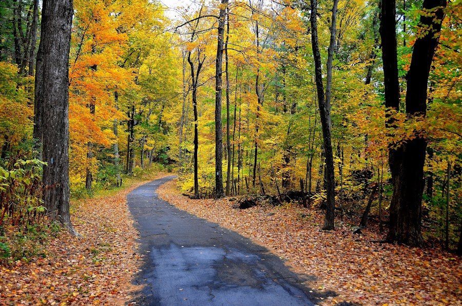 Autumn scene by Rajan Maruthaiyan - Nature Up Close Trees & Bushes ( fall leaves on ground, fall leaves, colourful, nature, autumn, colors, fall, scenery )