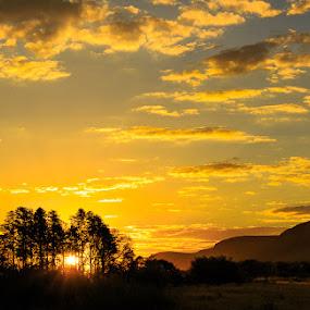 South African Gold by Hans-Erik Arp - Landscapes Sunsets & Sunrises ( mountain, sky, african, magaliesberg, sunset, south africa, sundown, trees, golden hour )
