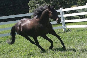 Screenshot of Horse