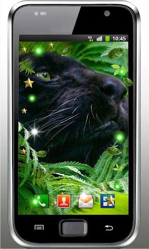 Panthera Love live wallpaper