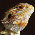 Bearded Dragons logo