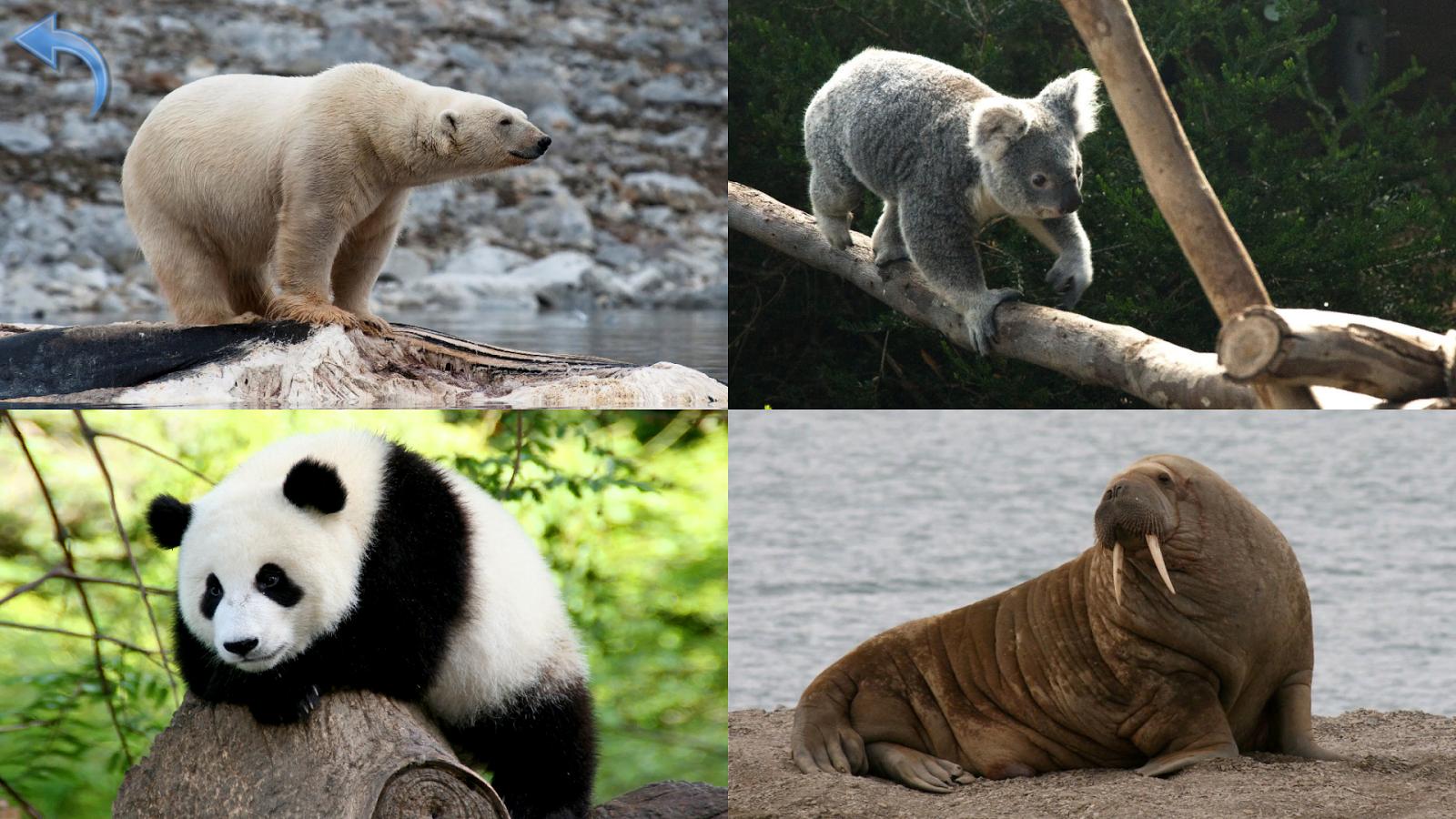 planet earth animals - photo #43