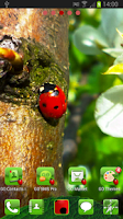 Screenshot of GO Launcher EX Ladybird Theme