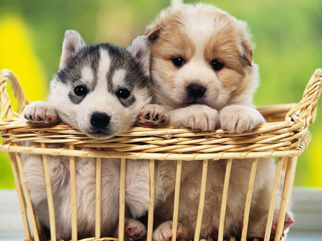 free puppy dog wallpaper - android apps on google play