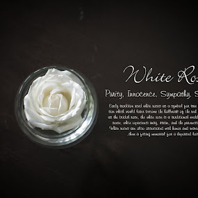 white rose by Andy Yusuf - Typography Captioned Photos