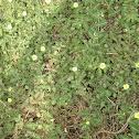 Imelda grass
