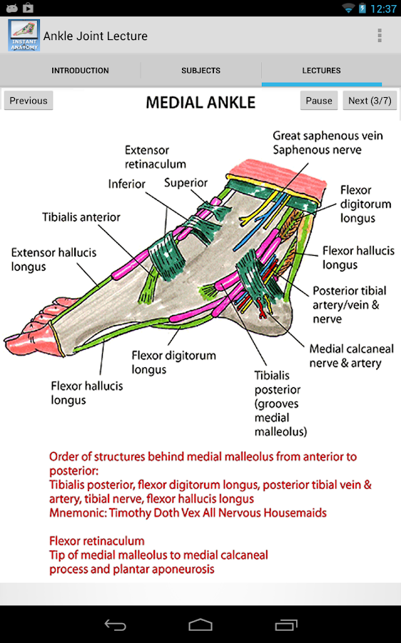 Anatomy of the Ankle Joint- screenshot