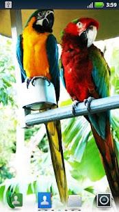 Parrots Live Wallpaper- screenshot thumbnail