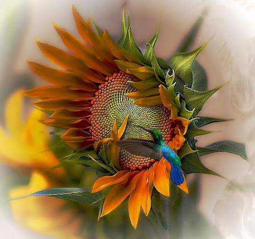 a moment in time by John Kolenberg - Uncategorized All Uncategorized ( jardine, mexico, hummingbird, sunflower, garden, girosol, hope,  )
