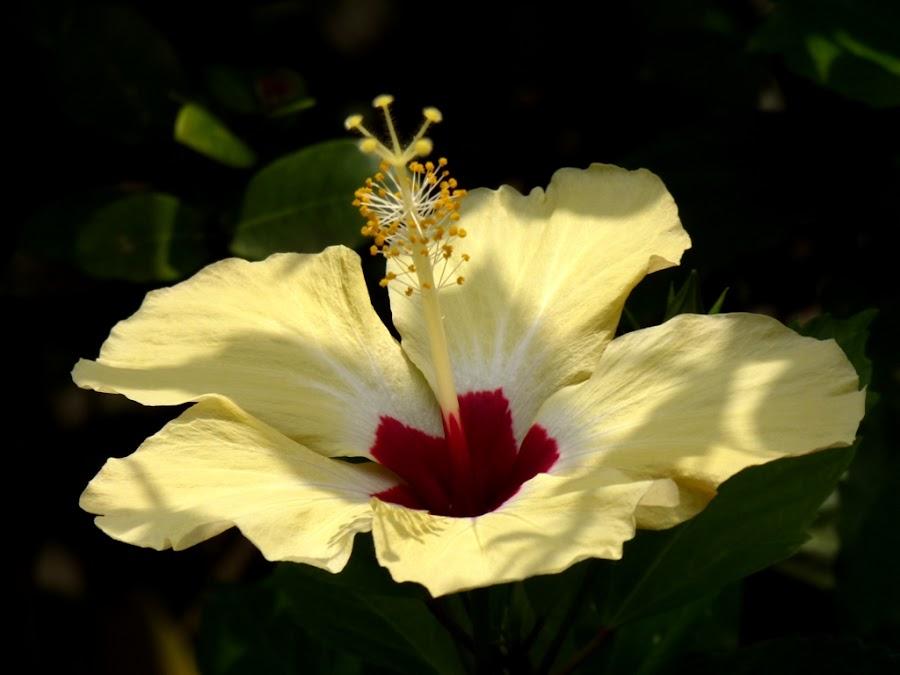 by Richard Beckmann - Nature Up Close Flowers - 2011-2013