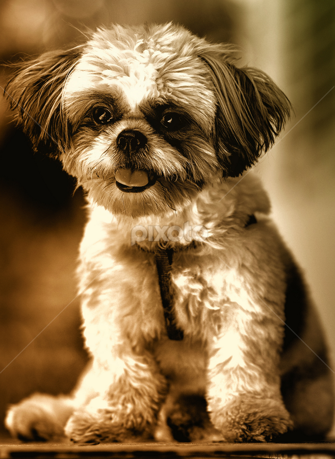 Cheesy by Ferdinand Ludo - Animals - Dogs Portraits ( pose, df, 135 dfc, steady,  )