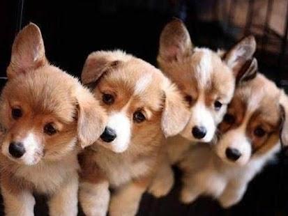 Free puppy dog wallpaper screenshot thumbnail