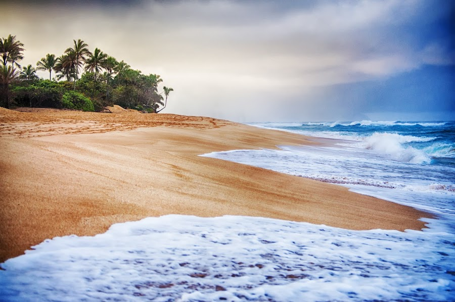 North Shore by Taylor Sanderson - Landscapes Beaches ( shore, sea, north shore, ocean, seascape, beach, landscape, oahu, hawaii )