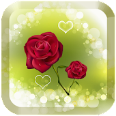 Red rose love wallpaper Free