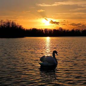 by Milenka Tatalovic - Landscapes Sunsets & Sunrises