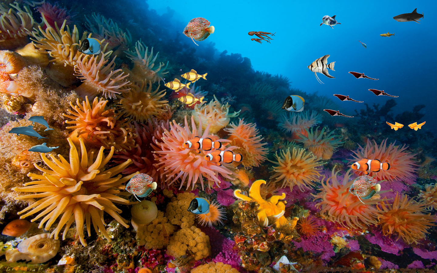 Coral reef free live wallpaper android apps on google play - Sea coral wallpaper ...