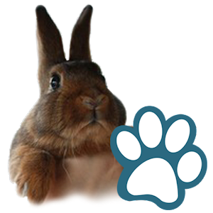 Rabbits for PC and MAC