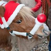 Weihnachtsmarkt Steprath
