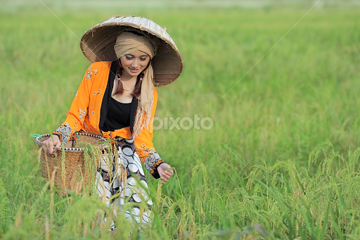Image result for petani cantik