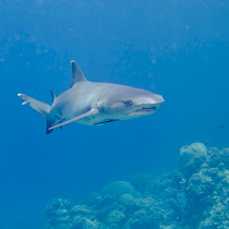 Sharks of the World: the ocean guardians