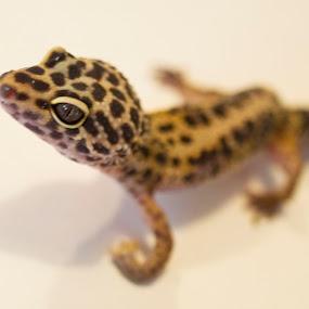 by Nicole Baumchen - Animals Reptiles (  )