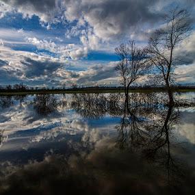 Trees by Damjan Voglar - Landscapes Cloud Formations