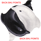 Acupuncture Back Shu Points icon