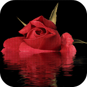 Red Rose In Water LWP