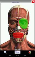 Screenshot of Visual Muscles 3D