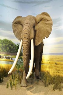 Elephant Wallpaper - screenshot thumbnail