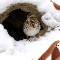 Wildlife with Snow, Frost, and Ice - NorthEastern United States