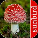 Pilz Id, Die Pilze Sammeln App icon