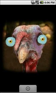 Turkey for Thanksgiving FULL